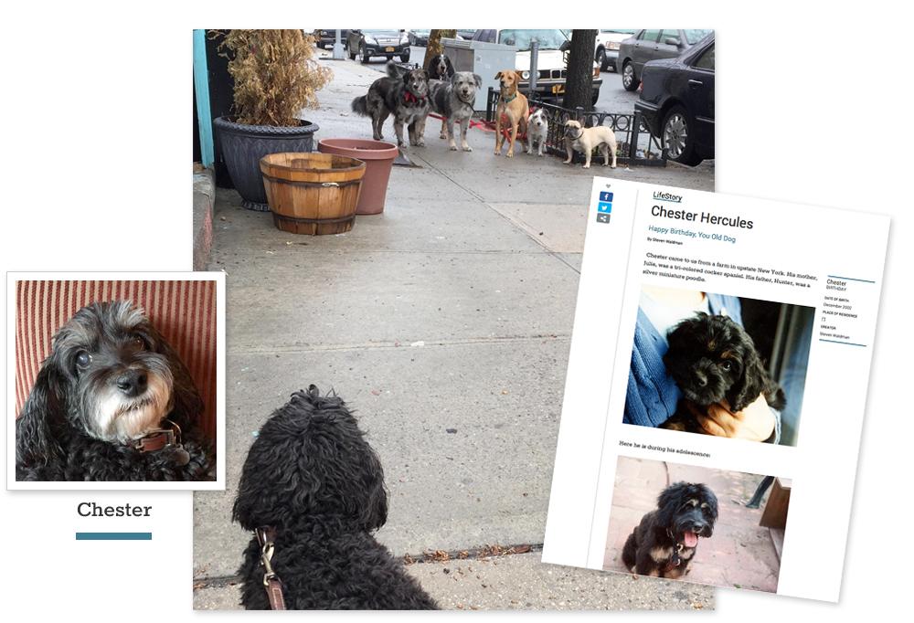 pet celebration websites