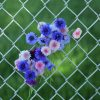 Flowers_in_a_wire_net_fence_less